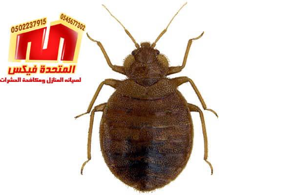 شركة مكافحة حشرات بالخرج